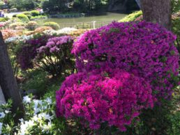 2015諫早公園NO2